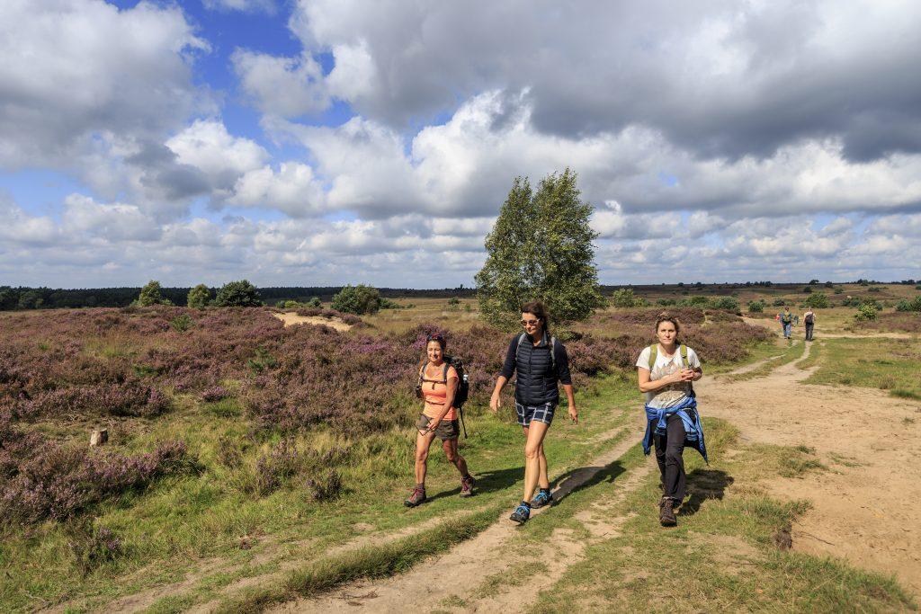 Wandelen op de heide in Nationaal Park De Hoge Veluwe