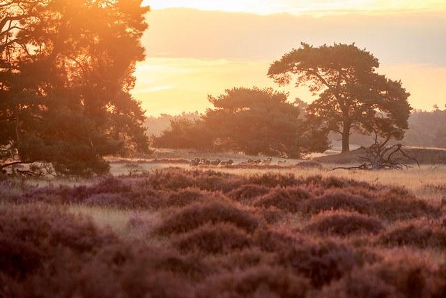 Schitterende kleurende heidevelden in augustus