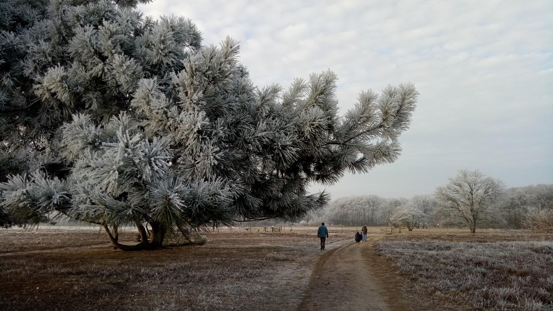 Winter wandeling op de Veluwe